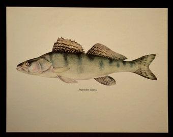 Cabin Decor Fish Print Fishing Print Wall Art Pike Print