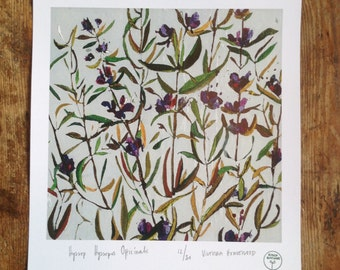 Botanical Watercour Artists High Quality Giclee Print 'Hyssop Hyssopus Officinallis'