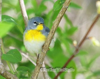 Northern Parula Photo | Warbler Photography | Tropical Theme Art | Bird Watcher Home Office Decor | FeatherWindStudio | Spring Bird Print