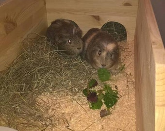 Guinea pig indoor run, perfect for cold nights