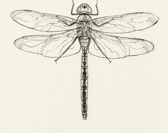 30 Dragonfly Drawing Card