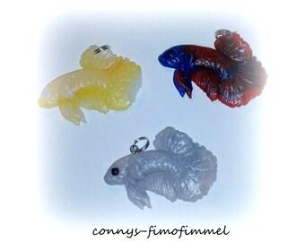 Betta sp. Fighterfish