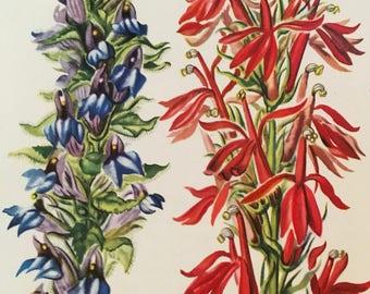 Great Lobelia, Lobelia siphilitica and Cardinal Flower, Lobelia cardinalis, Vintage illustration flower print wildflower farm house chic