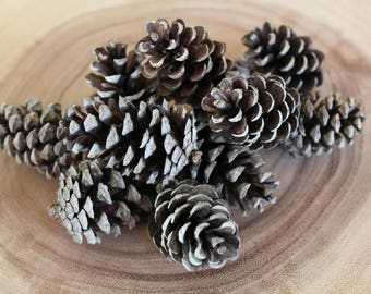 Mini pinecones, perfect for all your crafting and decorating needs