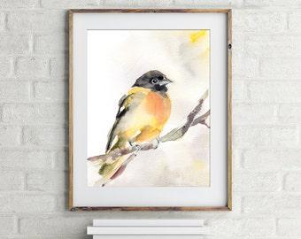 Bird Art Print, Bird Painting, Baltimore Oriole, bird watercolor painting, watercolour wall art, bird art