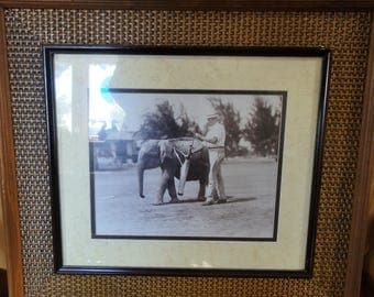 Vintage Baby Elephant Harnessed With Golf Clubs/ Golfer Photo/ Framed