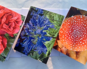 Greetings Card & Envelope Option.Happy Birthday,Thank You or Blank for your own message.Original Garden Artwork.Roses,Agapanthus,Toadstool