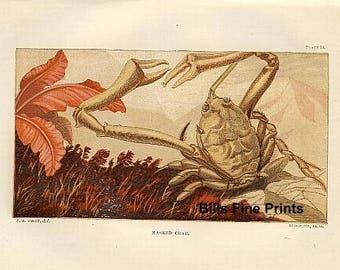 Plate 14 circa 1870
