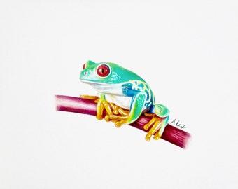 Tree Frog colored pencil drawing ORIGINAL
