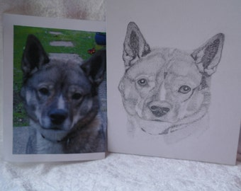 Pet portrait, custom pet portrait