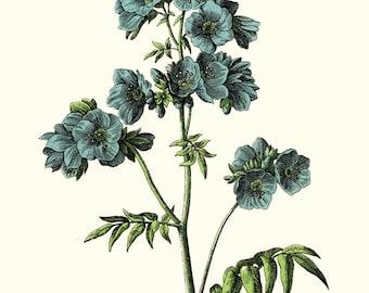 Vintage Blue Flower Botanical print DIGITAL download.Vintage Botanical Flower Print, Vintage Lavender Flower Wall Art.Lavender Illustration.