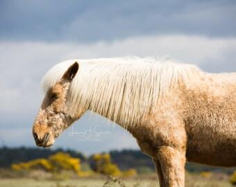 Savannah - Horse Photography (Equine Fine Art Print)