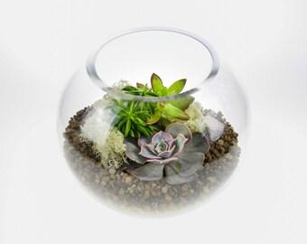 Globe Glass Terrarium Kit Perfect Gift | Beautiful Medium Sized Terrarium featuring 3 living Succulent Plants & decorative stone