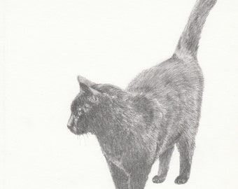 Drawing of a black cat, fine art print of a pencil drawing - pet portrait - gift for cat lovers