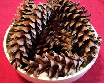 Large Pine Cones, Eastern White Pine, Real Pinecones, Home Wedding Decor, Fall or Winter Decorations, Crafts Wreaths Ornaments Firestarters