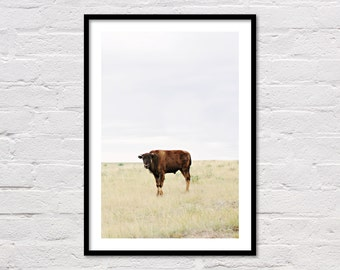 Calf Buffalo Print, Printable Wall Art, Animal Prints, Minimal Southwestern Decor, Baby Animals, Farm Photography, Wyoming, Digital Download
