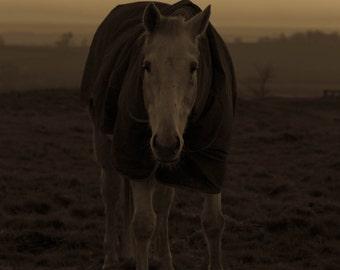 Horse Photo Print (8x10)