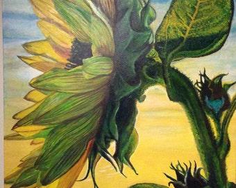 Painting Sunflower painting