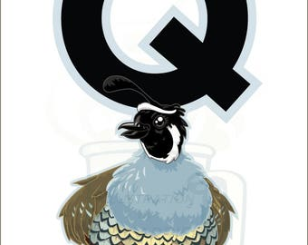 Q is for Quail : Animal Alphabet
