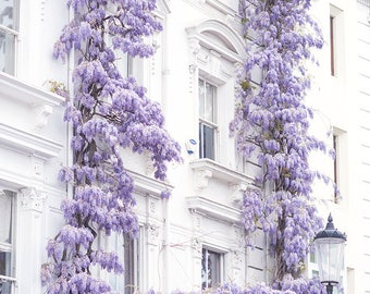 London Photography - Wisteria in Notting Hill, Spring in London, Purple Blossoms, England Travel Decor, Large Wall Art, Gallery Wall