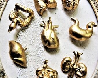 PUSH PINS Pushpins Thumb Tacks Decorative Thumbtack Gold Cubicle Decor Anatomical Organs Heart Brain Cool Unique Corkboard Human Anatomy Pin