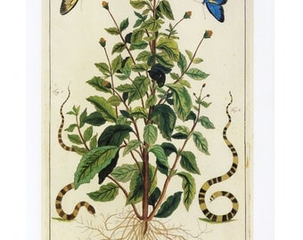 Flower Plant Butterfly Print Book Plate SALE Buy 3, get 1 Free