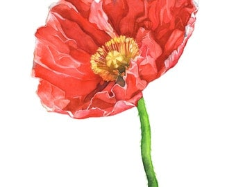 Poppy watercolor painting print, A4 size, P17317, Poppy print, poppy watercolour print, botanical wall art, flower watercolor print poppies