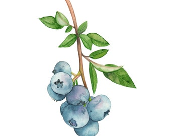 Blueberries original watercolour painting, Blueberries watercolour painting original, blueberries painting, Kitchen Wall Art