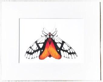 Matted Moth illustration, entomology study, coloful insect, artist print
