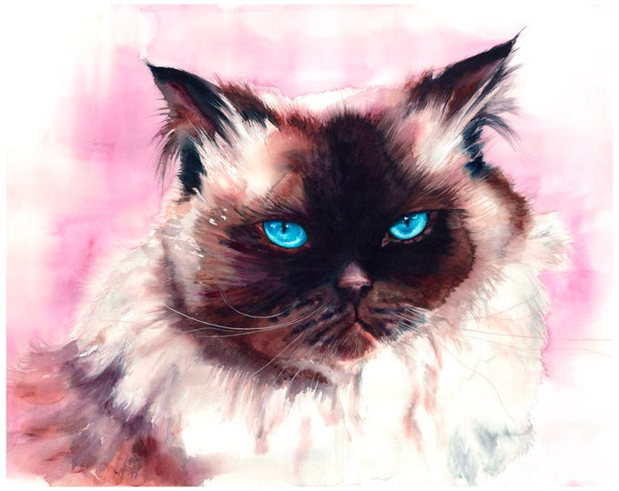 """Featured listing image: Himalayan Cat Watercolor Art Fine Art Print 8x10"""" Watercolor Himalayan Cat Print Himalayan Cat Painting Himalayan Cat Art Watercolor Cat"""