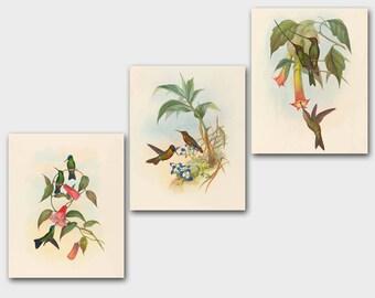 Bird Print Set, Hummingbird Art Print (Antique Botanical Prints, Vintage Bedroom Wall Decor) John Gould - Set of 3