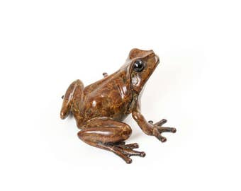 Limited edition bronze tree frog No.3 (Looking right)