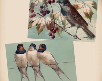 Three Swallows - Bird - Berries - 2 New 4x6 Vintage Image Photo Prints FN04 FN22