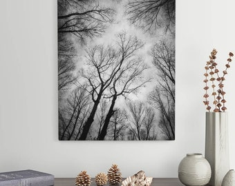"Rustic Black and White Nature Canvas Wall Art, Trees Photograph, Choose Your Size From 8x10 - 30x40, ""Vertigo 1"""