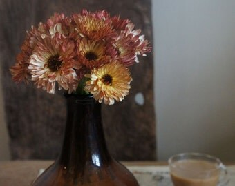 ACL) COFFEE CREAM Calendula~Seed!~~~~~Love It!