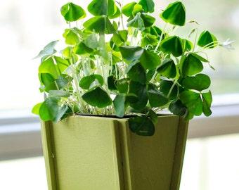 Small Indoor Planter, Succulent Planter, Small Planter Pot, Herb Planter, Indoor Garden, Kitchen Planter