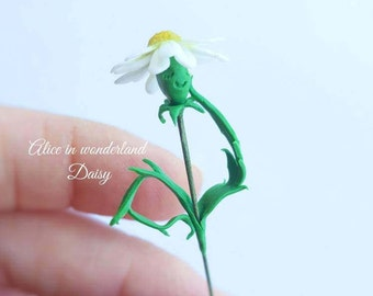 Alice in wonderland miniature daisy