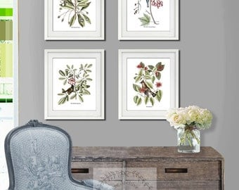 Botanical Prints Birds Art Prints set of 4 unframed prints, Catesby Bird Prints, Dining room decor, Gift for her, Housewarming gift