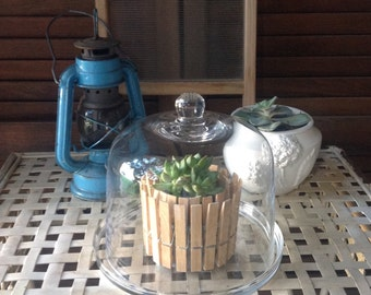 Cloche and Plate Glass Cloche and Glass Plate mini Vignette Decorative Accent Succulent Cloche Cheeses Plate
