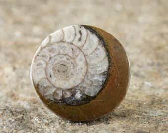 Two Small AMMONITE Fossil Disks - For Ammonite Jewelry, Fossil Gift, Ammonite Pendant, Ammolite Cabochon & Ammonite Necklace E0093