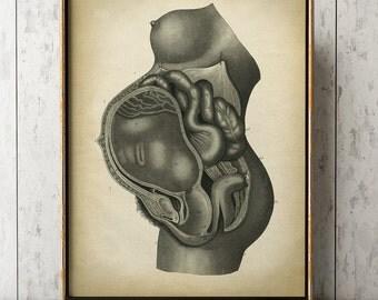 Pregnancy Anatomy Print, Fetus Vintage Anatomy Poster, Pregnant Medical Wall Art, Mom Anatomy Poster, Scientific Anatomy Print, Home Decor