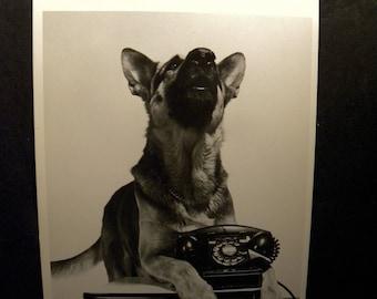 German Shepherd Rin Tin Tin Photo Postcard, 1958 Philippe Halsman