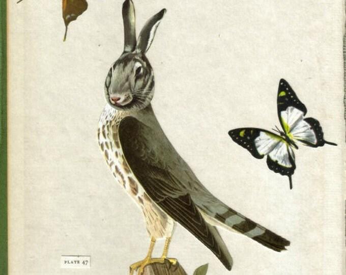 Hybrid Animal Art Collage, Bird Bunny Artwork