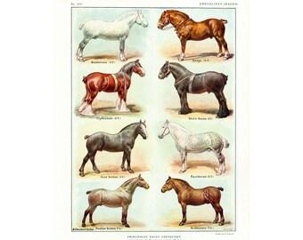 1922 Horse Breeds Print. Horse wall art. Horse breeds identification chart.Farm Decor