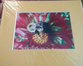 Macro Photography. Bee. Print
