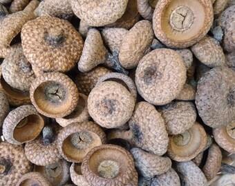 Natural oak acorn caps. Big acorn caps. 50+ pct. Vase filler. Basket filler. Rustic home decor. Thanksgiving decor. Wedding decor.
