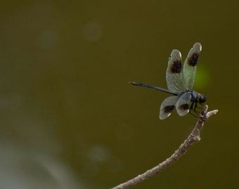 Dragon Fly on Twig, Nature Photography, Digital Download, Wall Art