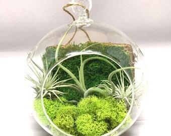 5.5 inch Air Plant Terrarium