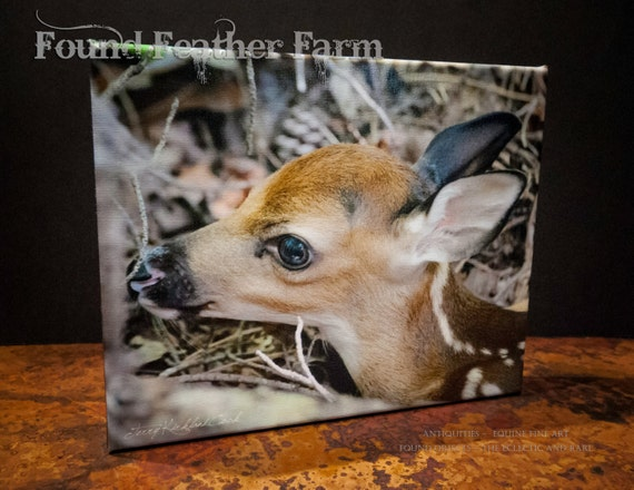 "Fine Art Photograph Giclee ""Tiny Newborn Fawn"" on Canvas Signed by the Artist"