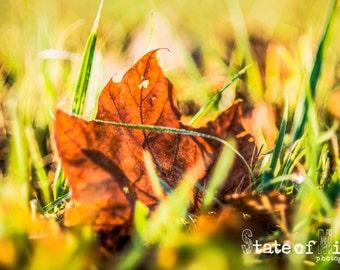Photography Print. Nature. Autumn.